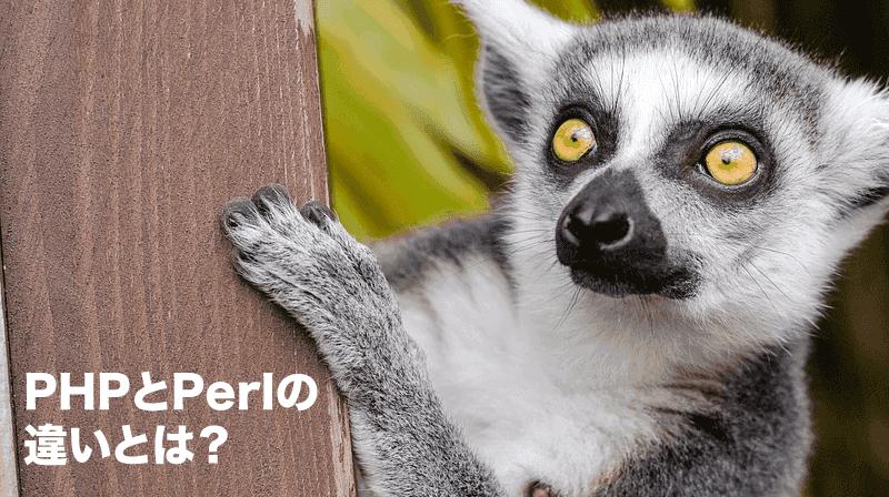 PHPとPerlの違いとは