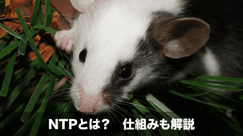 ntpとは