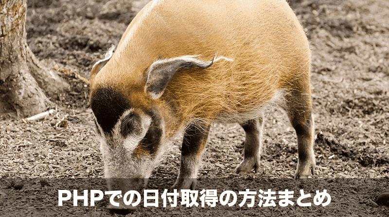 php 日付取得