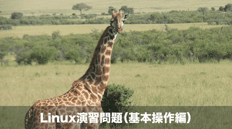 linux演習問題 基本操作編