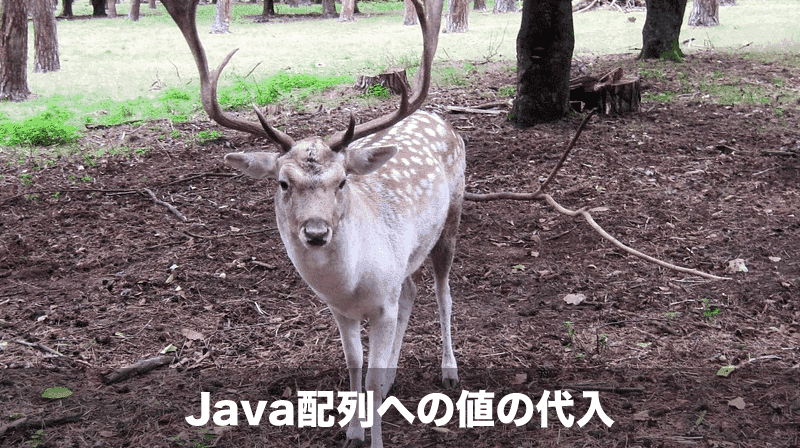 java配列の値の代入